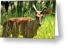 Summer Deer Greeting Card