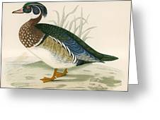 Summer Duck Greeting Card