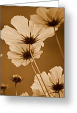 Summer Evening Cosmos  Greeting Card