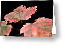 Summer Fall Greeting Card