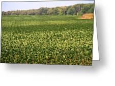 Summer Farm Field Greeting Card