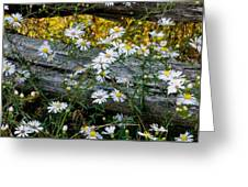 Summer Fence Greeting Card