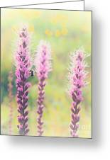 Summer Flowers Of The Blue Ridge Parkway II Greeting Card