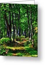 Summer Forest In Ohio Greeting Card
