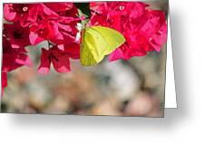 Summer Garden II In Watercolor Greeting Card