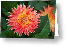 Summer Garden Joy Greeting Card