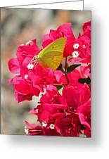 Summer Garden Greeting Card