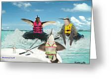 Summer Hummer Greeting Card