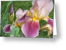 Summer In Bloom 2 Greeting Card