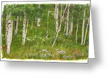 Summer In The Colorado Mountains Greeting Card