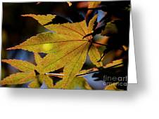 Summer Japanese Maple - 1 Greeting Card