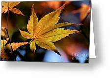 Summer Japanese Maple - 2 Greeting Card