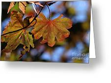 Summer Japanese Maple - 4 Greeting Card