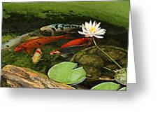 Summer Koi And Lilly Greeting Card