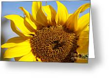 Summer Love Greeting Card