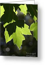 Summer Maple Leaves Greeting Card