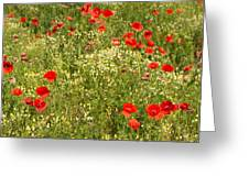Summer Meadow Background Greeting Card
