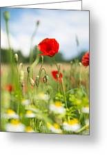 Summer Meadow With Red Poppy Greeting Card