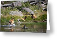 Summer Morning Dip - Elk In Yellowstone National Park - Wyoming Greeting Card