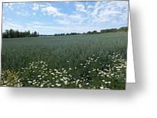 Summer On The Farm Greeting Card
