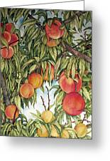 Summer Peaches Greeting Card by Helen Klebesadel