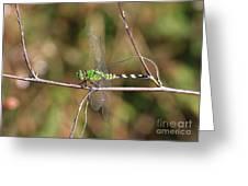 Summer Pondhawk Dragonfly Greeting Card