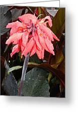 Summer Rain In Maryland Greeting Card