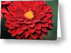 Fiery Red Dahlia Greeting Card
