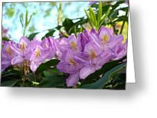 Summer Rhodies Flowers Purple Floral Art Prints Greeting Card