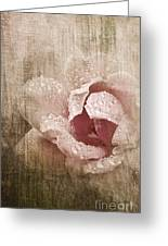 Summer Rose #1 Greeting Card