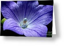 Floral Summer Sensation  Greeting Card