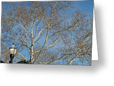 Summer Sky Winter Day Greeting Card