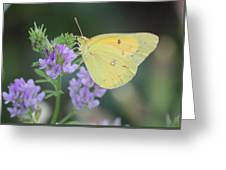 Summer Solace Greeting Card