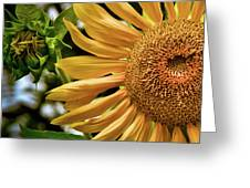 Summer Splendor Greeting Card