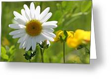 Summer Sunshine On Wildflowers Greeting Card