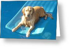 Summer Swim Greeting Card