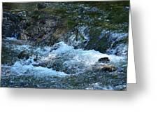 Summer Waters Greeting Card