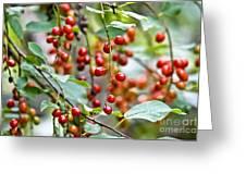 Summer Wild Berries Greeting Card