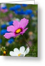 Summer Wild Blooms Greeting Card