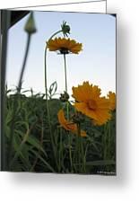 Summer Wild Flowers Greeting Card