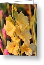 Summer Yellow Gladiolus Greeting Card