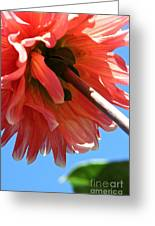 Summer's End Dahlia Greeting Card