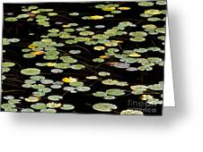 Summer's End Lily Pads Greeting Card