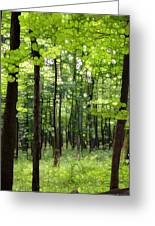Summer's Green Forest Abstract Greeting Card