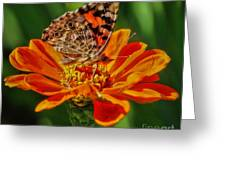 Summers Last Butterfly Greeting Card