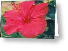 Summer's Last Hibiscus Greeting Card