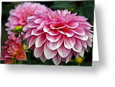 Summertime Blossoms Greeting Card