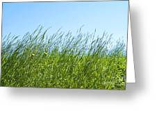 Summertime Grass Greeting Card