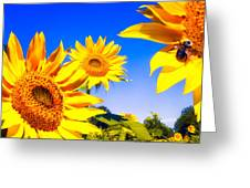 Summertime Sunflowers Greeting Card