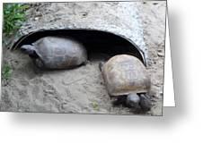 Sun Basking Turtles Greeting Card